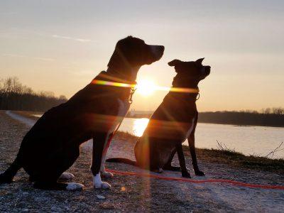Inspiration für den Wassertrog und die Hundefressstaion von Semento